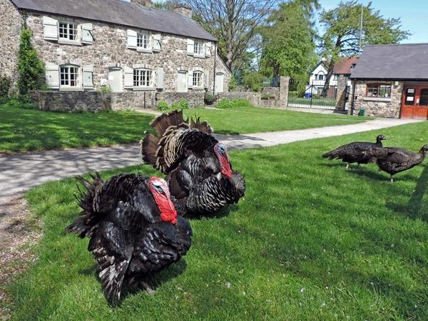 13 Greenfield Heritage Park 4.jpg re