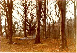 Marl Woods